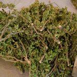 petite branche naturel pour imitation d'arbustes