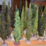 végétation hybride les cyprès