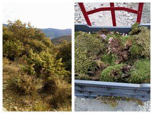 végétation trouver dans la nature