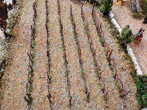champs de vigne terminé