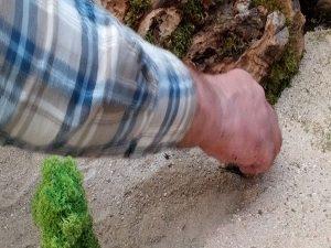 pose de la mousse dans le sol