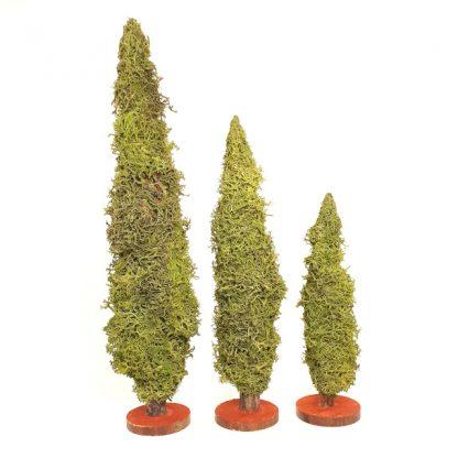 trois cyprès miniature taille
